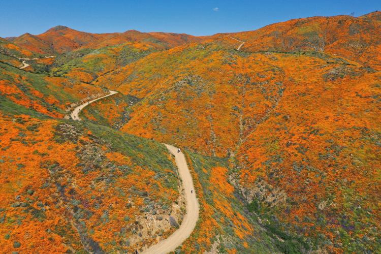 Hilltop Drive (Super Bloom) Bike Climb - PJAMM Cycling