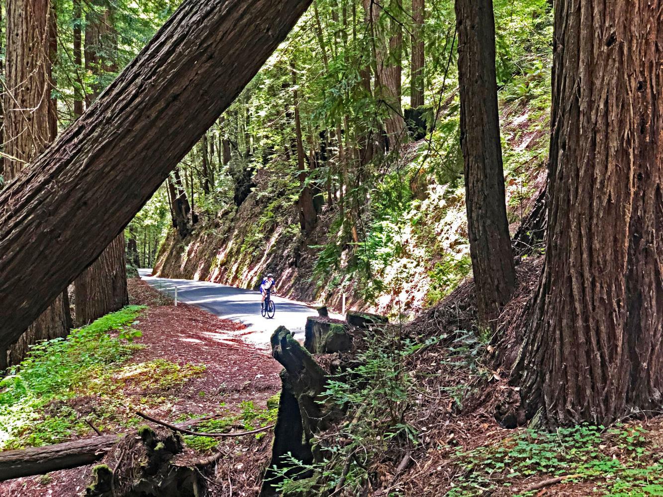 Tunitas Creek Bike Climb - PJAMM Cycling