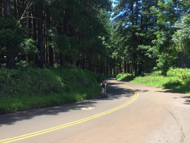 Baldwin - Olinda Roads Bike Climb - PJAMM Cycling