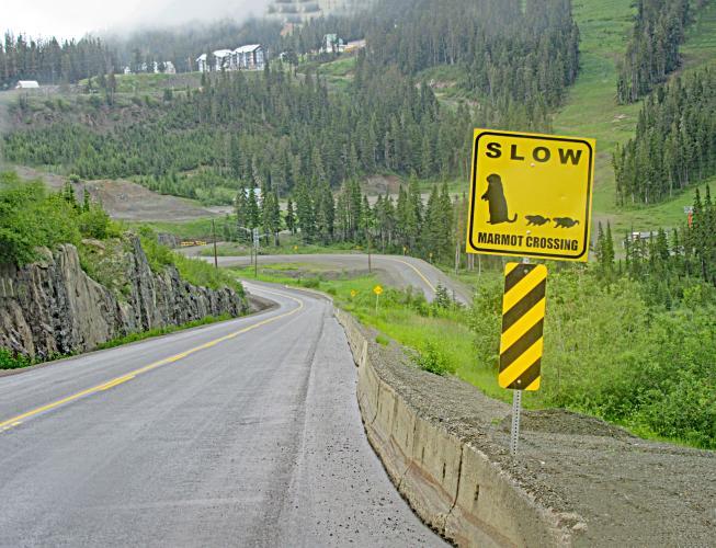 Mt. Washington Bike Climb - PJAMM Cycling