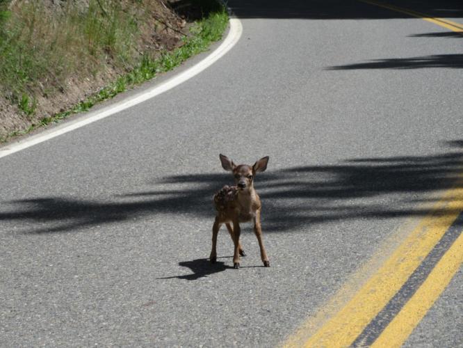 Callahan-Cecilville West Road Bike Climb - PJAMM Cycling