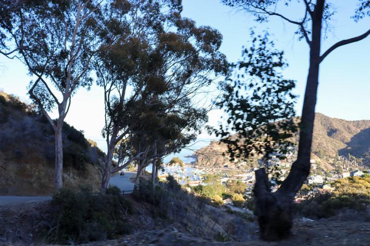 Santa Catalina Stagecoach Road Bike Climb - PJAMM Cycling