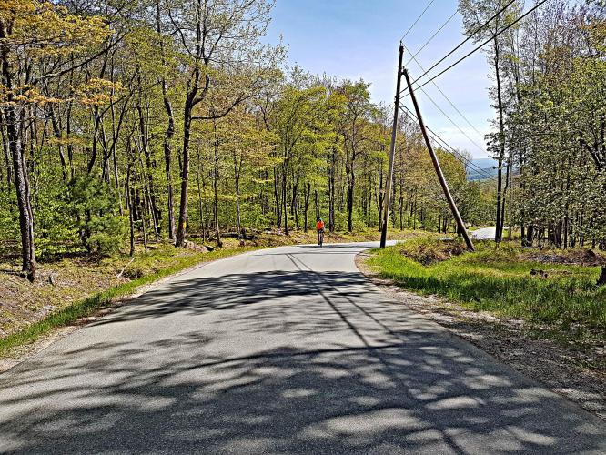 Sugarloaf - Red Hill Bike Climb - PJAMM Cycling