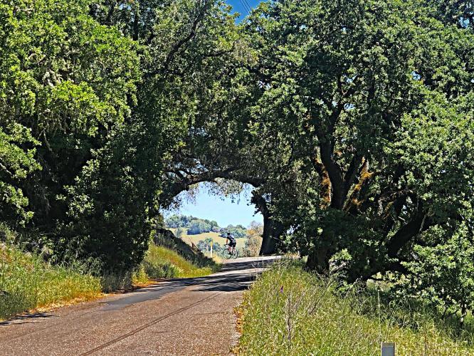 Pine Mountain Road Bike Climb - PJAMM Cycling
