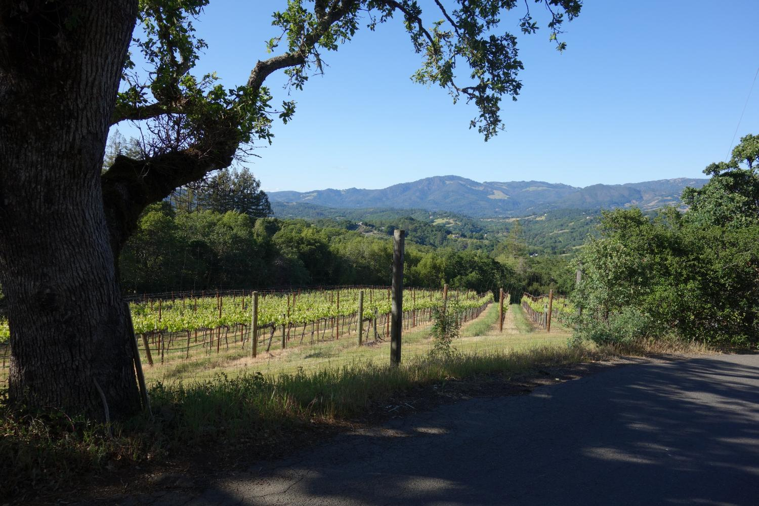 Sonoma Mountain Road East Bike Climb - PJAMM Cycling