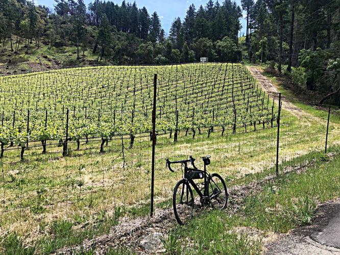 Dry Creek-Trinity Road Bike Climb - PJAMM Cycling
