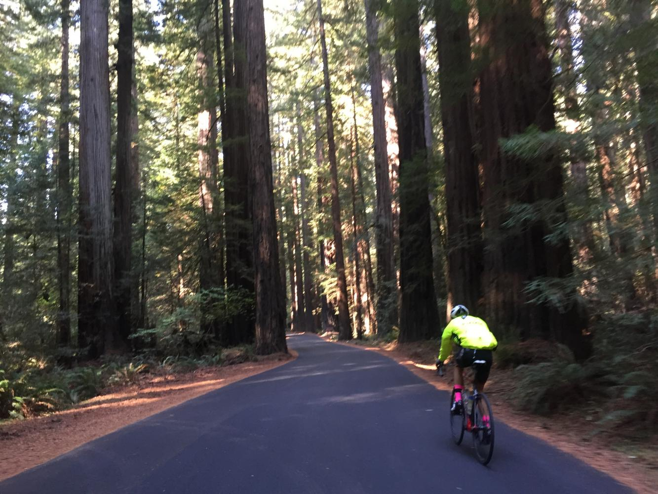 Mattole Road East to Panther Gap Bike Climb - PJAMM Cycling