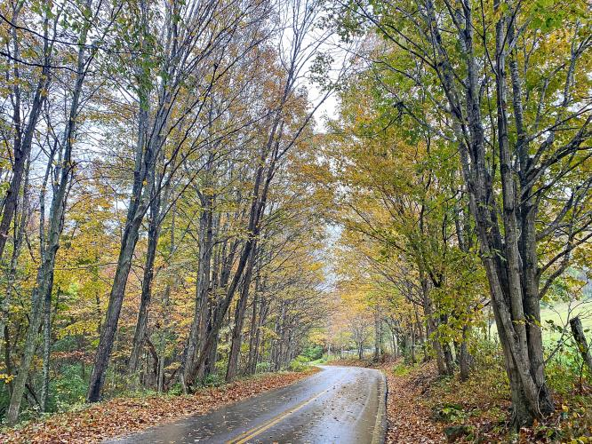 Doe Creek Road (Route 613) Bike Climb - PJAMM Cycling