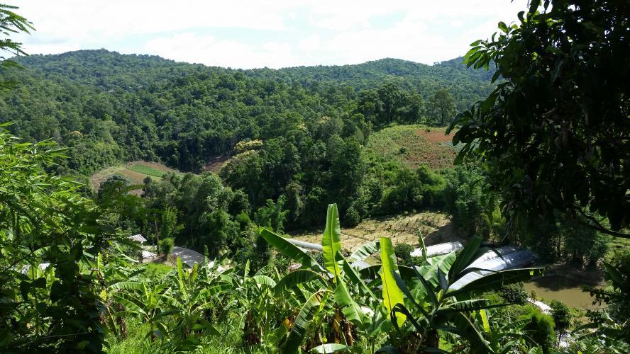 Hmong View Climb Bike Climb - PJAMM Cycling