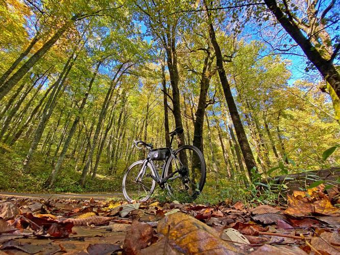 Wolfpen Gap East Bike Climb - PJAMM Cycling